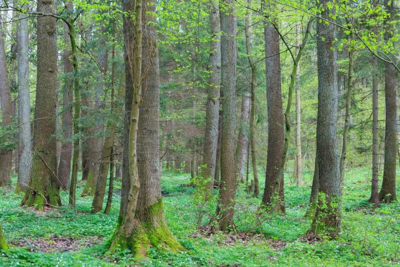 Erle Wald