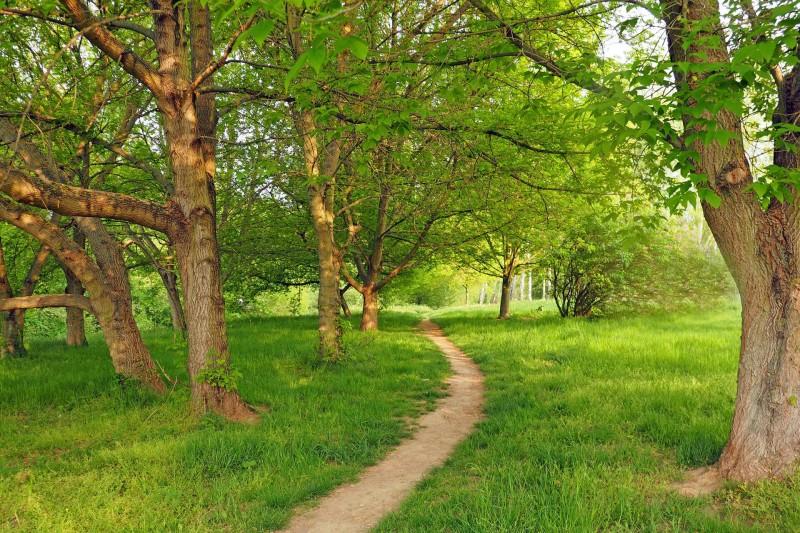 Esche Wald