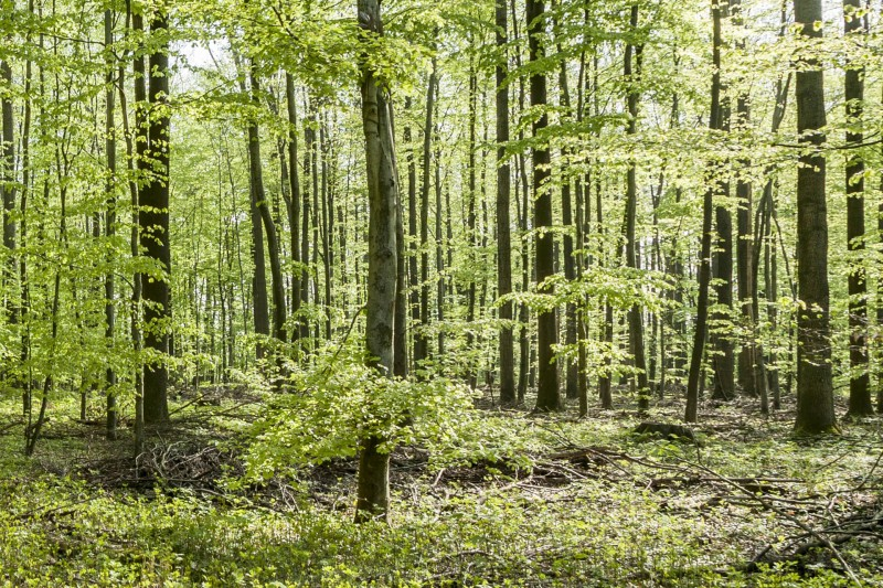 Eiche Wald