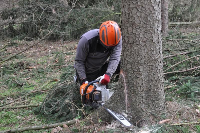 Baum wird gefällt