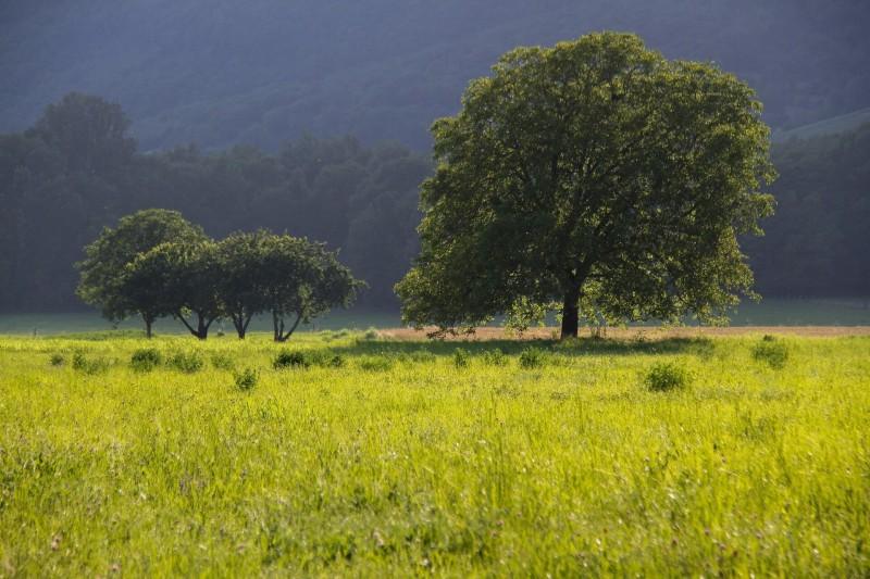 Nussbaum Wald